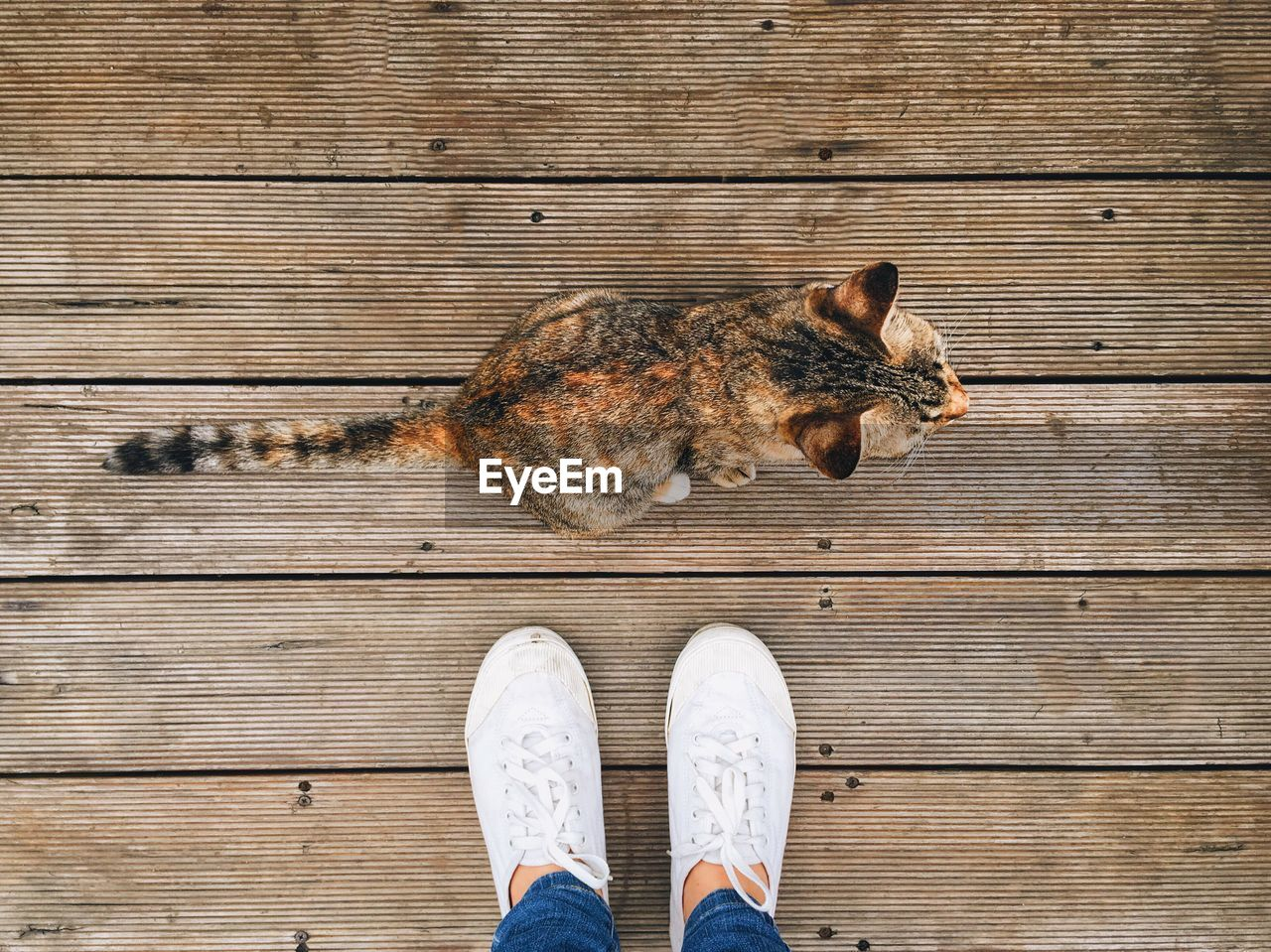 Low section of owner standing by cat on wooden walkway