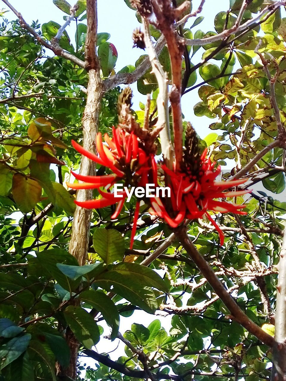 growth, flower, nature, beauty in nature, tree, red, low angle view, day, petal, fragility, no people, blossom, green color, freshness, branch, outdoors, plant, leaf, flower head, blooming, close-up