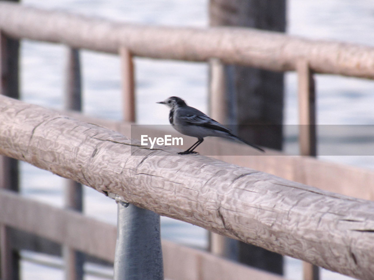 bird, animal wildlife, vertebrate, animal, animal themes, animals in the wild, perching, focus on foreground, railing, one animal, day, metal, no people, outdoors, boundary, close-up, fence, architecture, barrier, wood - material