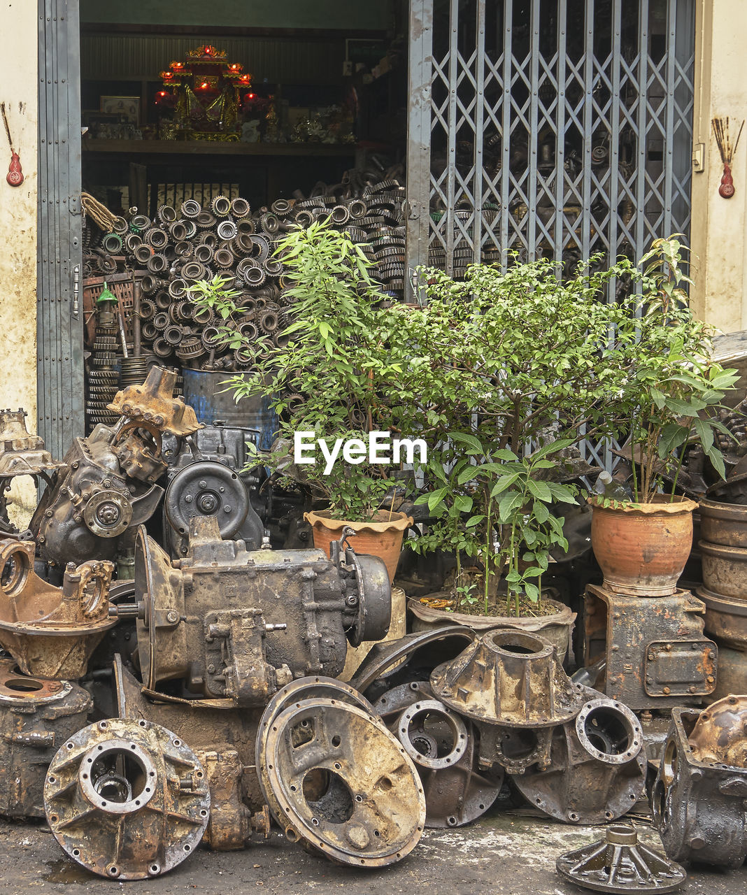 plant, potted plant, day, growth, no people, nature, metal, outdoors, architecture, built structure, building exterior, large group of objects, building, choice, gate, fence, front or back yard, green color, rusty, container, flower pot, wheel