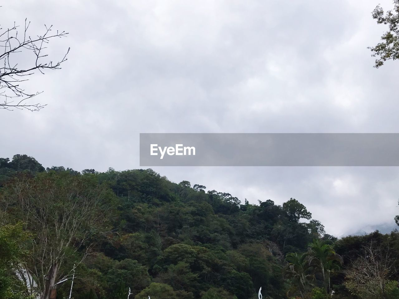 tree, sky, plant, cloud - sky, beauty in nature, nature, growth, no people, tranquility, environment, day, tranquil scene, low angle view, land, non-urban scene, scenics - nature, outdoors, mountain, forest