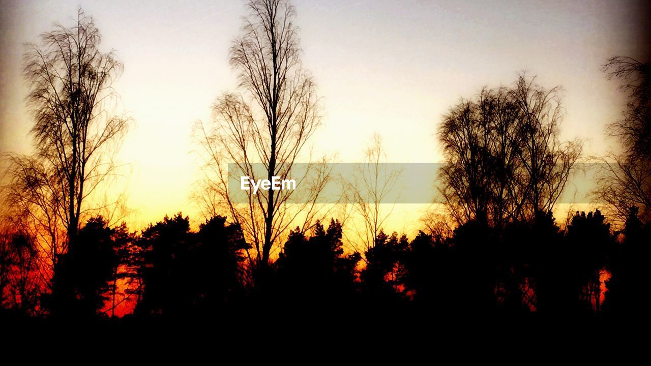 sunset, tree, silhouette, nature, beauty in nature, scenics, tranquility, tranquil scene, no people, sky, growth, forest, outdoors, landscape, day