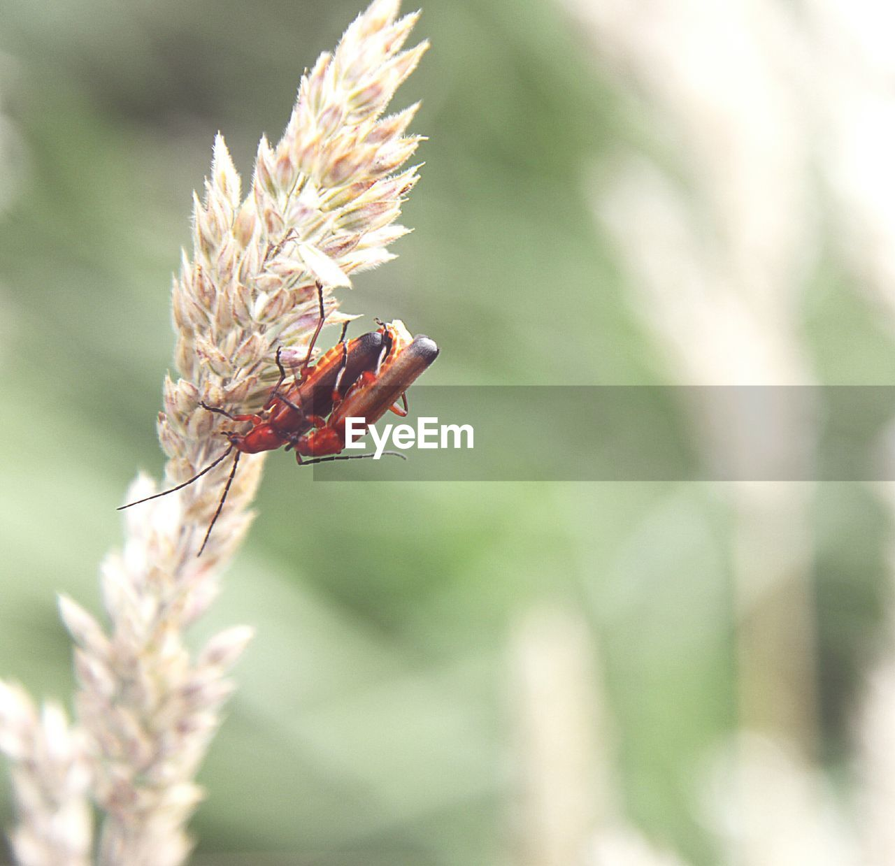 animal themes, animal, animal wildlife, animals in the wild, invertebrate, insect, one animal, plant, focus on foreground, close-up, flower, flowering plant, day, nature, no people, vulnerability, fragility, beauty in nature, red, selective focus, outdoors, flower head, pollination