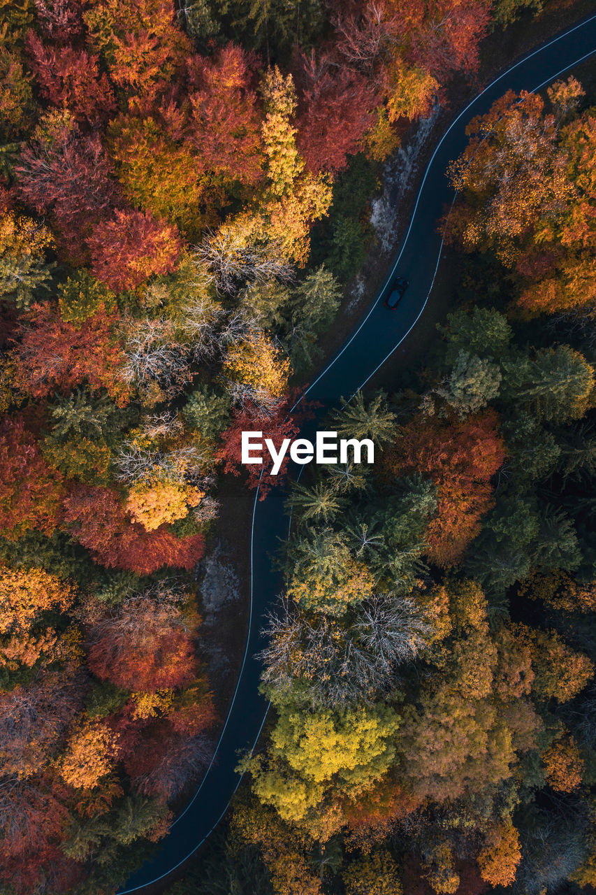 autumn, change, tree, plant, nature, no people, day, orange color, beauty in nature, leaf, plant part, outdoors, scenics - nature, transportation, road, non-urban scene, high angle view, tranquility, idyllic, growth, autumn collection, leaves, natural condition