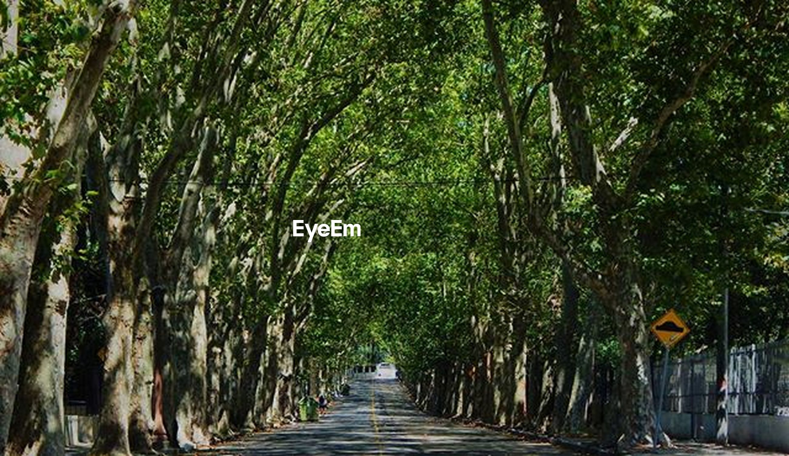 the way forward, tree, diminishing perspective, vanishing point, treelined, footpath, narrow, growth, walkway, pathway, in a row, long, green color, nature, road, empty, transportation, street, tree trunk, tranquility