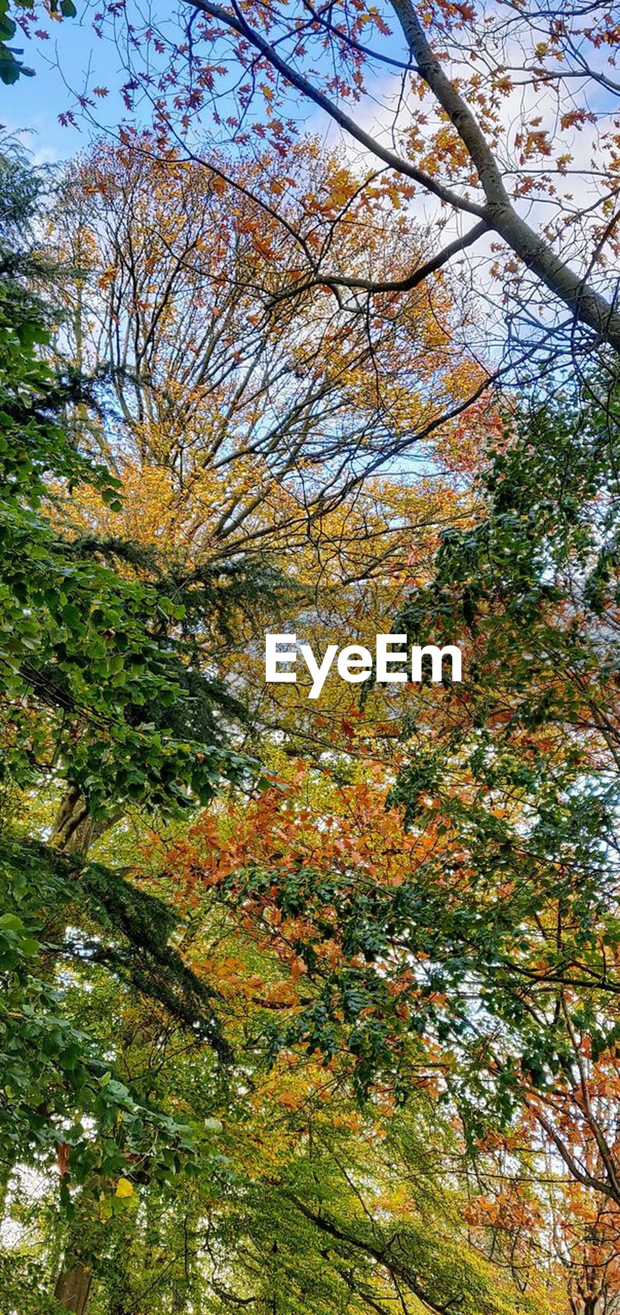 tree, plant, growth, autumn, beauty in nature, branch, no people, change, nature, tranquility, low angle view, day, outdoors, tranquil scene, scenics - nature, sky, land, forest, leaf, plant part, tree canopy