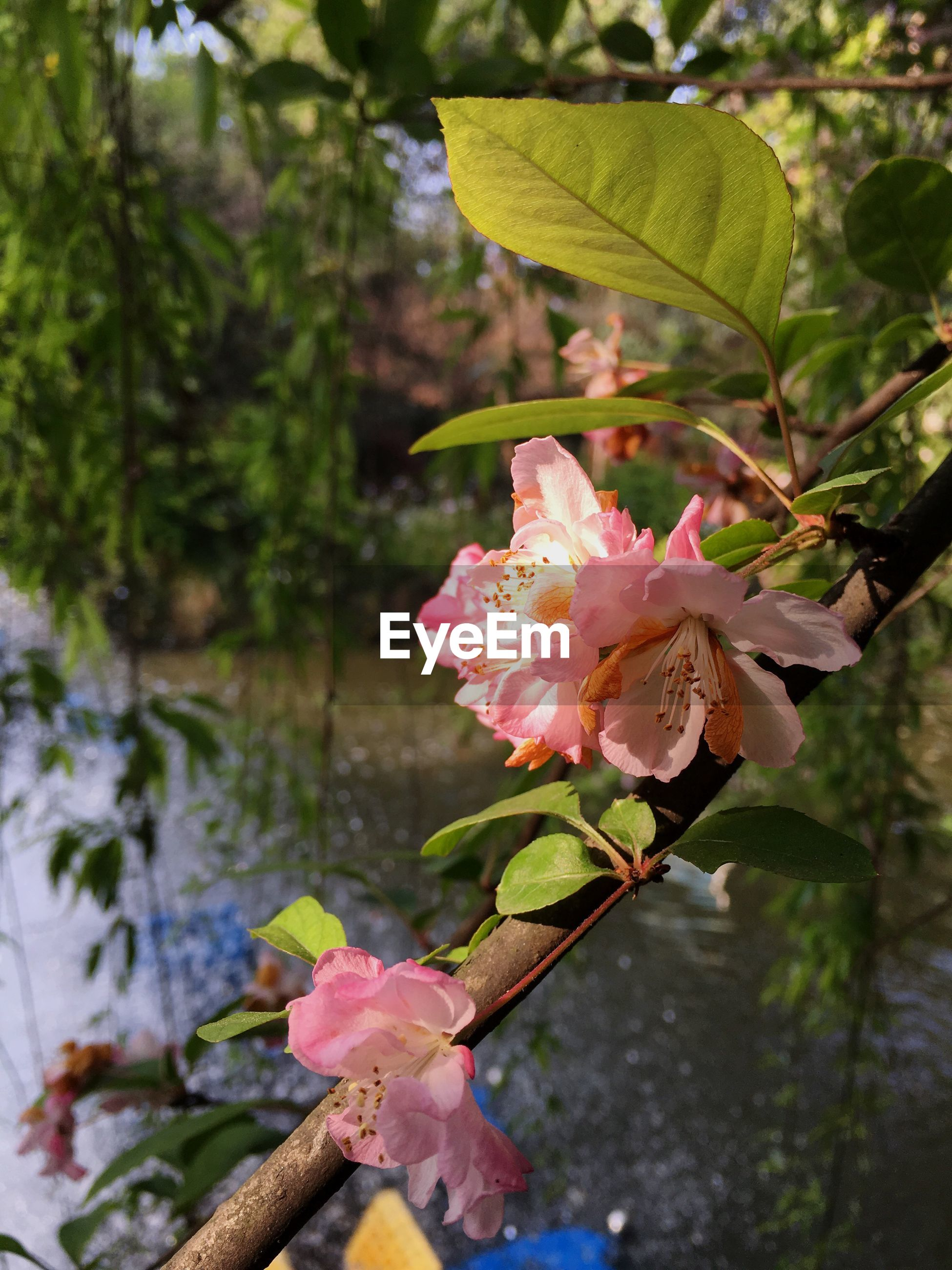 flower, focus on foreground, freshness, close-up, fragility, growth, nature, petal, leaf, tree, beauty in nature, plant, stem, season, day, outdoors, pink color, flower head, branch, change