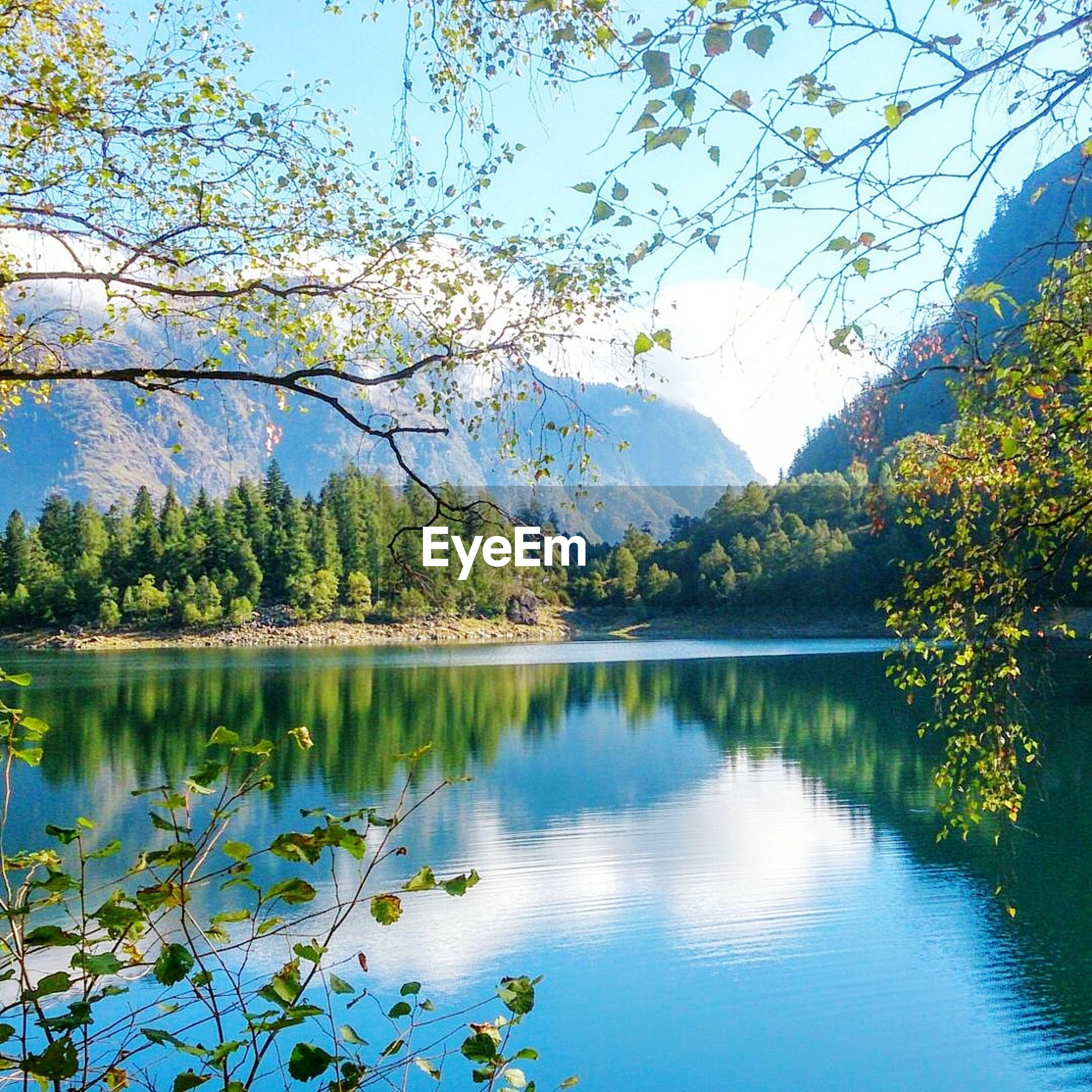 lake, tree, beauty in nature, reflection, nature, water, scenics, mountain, tranquil scene, tranquility, day, idyllic, no people, growth, outdoors, branch, sky, flower