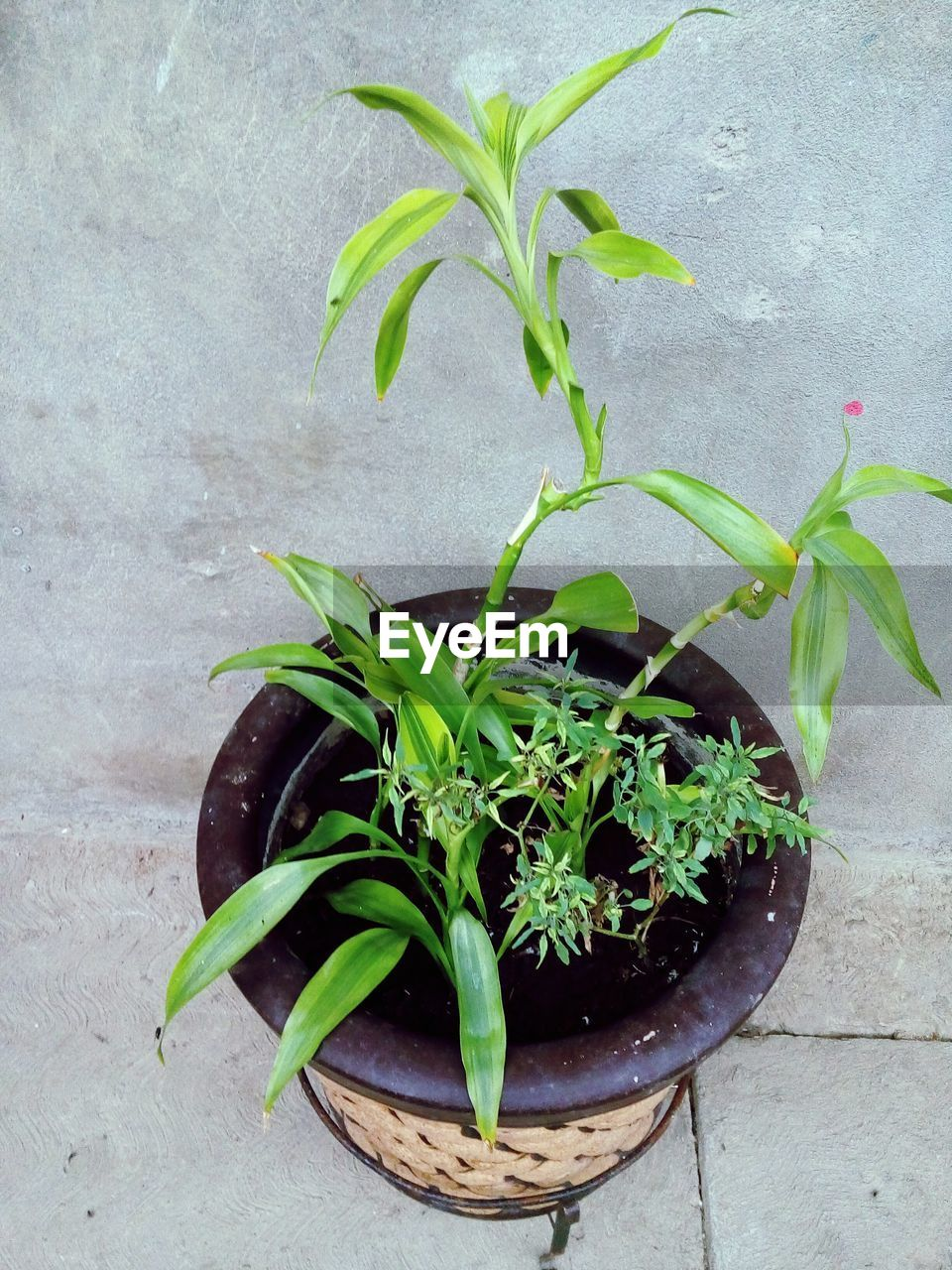 growth, plant, green color, leaf, potted plant, no people, nature, freshness, outdoors, day, close-up