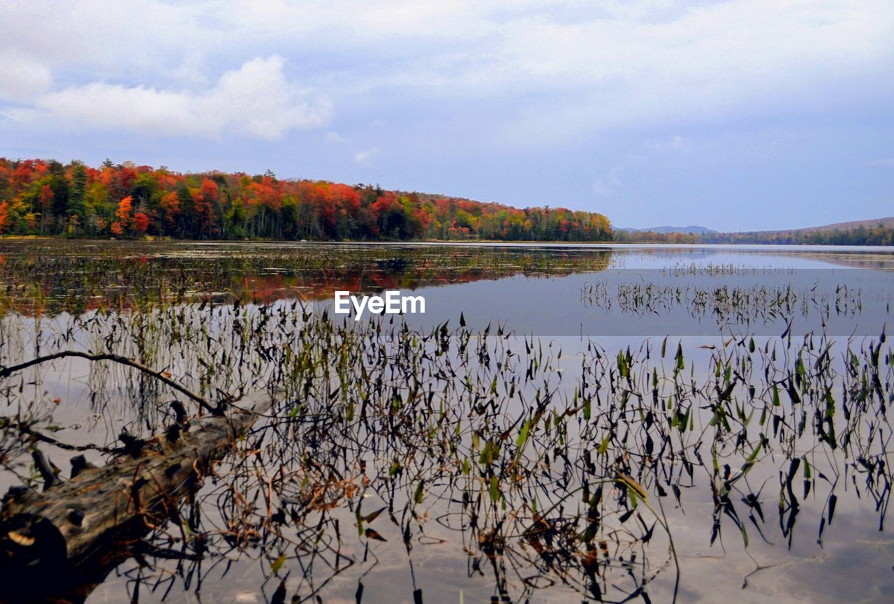 water, lake, sky, plant, beauty in nature, cloud - sky, tranquility, nature, tranquil scene, reflection, scenics - nature, autumn, no people, tree, day, change, growth, outdoors, non-urban scene