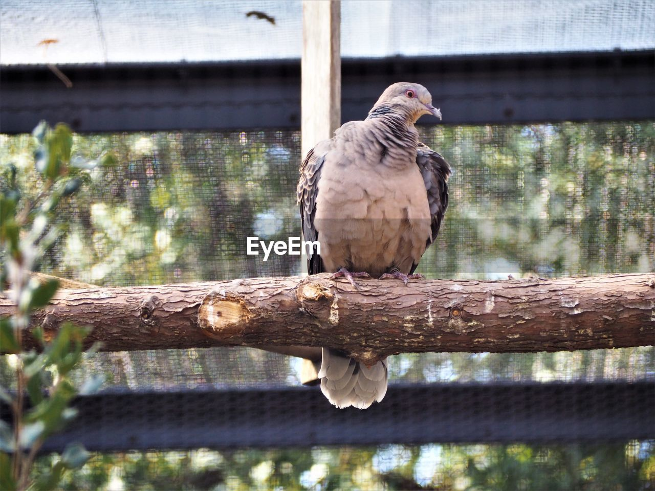animal, animal wildlife, animal themes, animals in the wild, vertebrate, bird, perching, one animal, focus on foreground, day, tree, no people, wood - material, outdoors, close-up, bird of prey, nature, branch, plant, full length