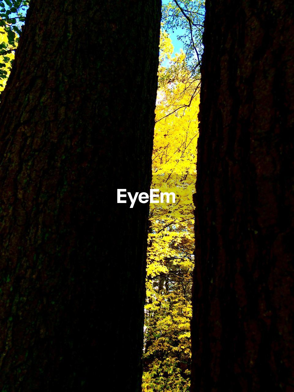 tree, tree trunk, nature, growth, day, yellow, no people, textured, outdoors, beauty in nature, forest, close-up, branch