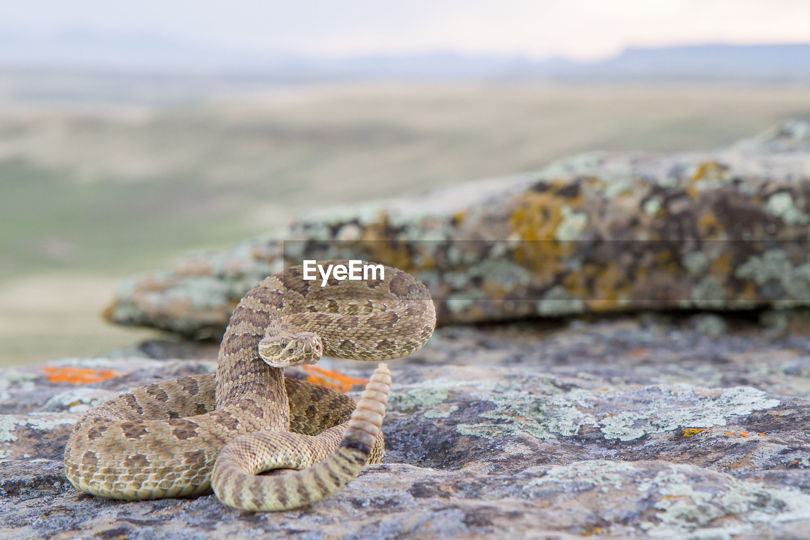 Close-up of snake on rock