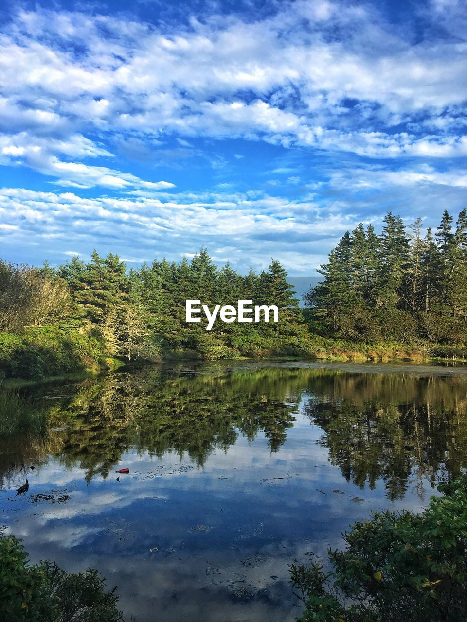 reflection, tree, lake, water, sky, nature, tranquil scene, cloud - sky, beauty in nature, scenics, tranquility, no people, day, outdoors, growth, forest, mountain