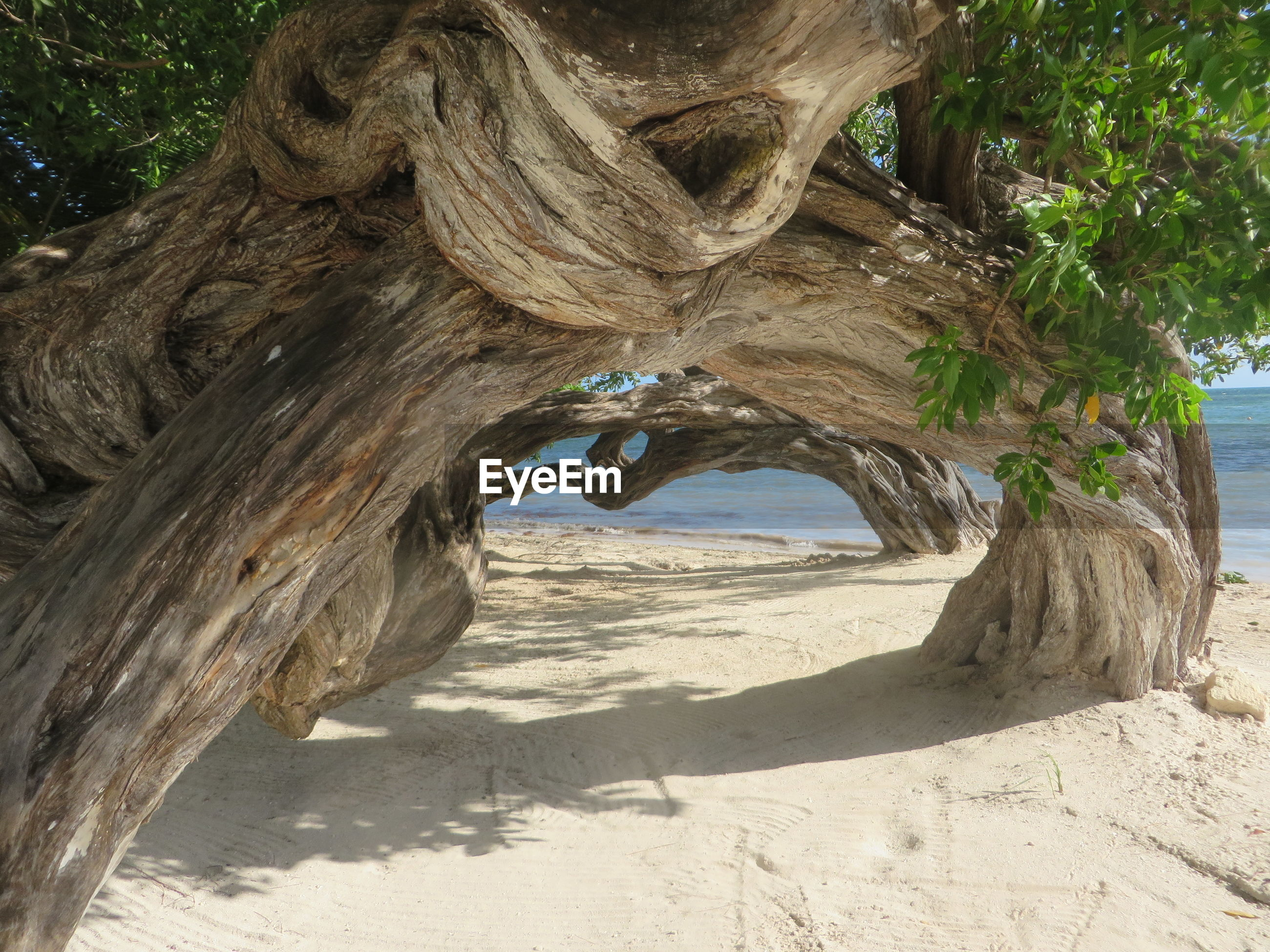 Trees on sandy beach during sunny day