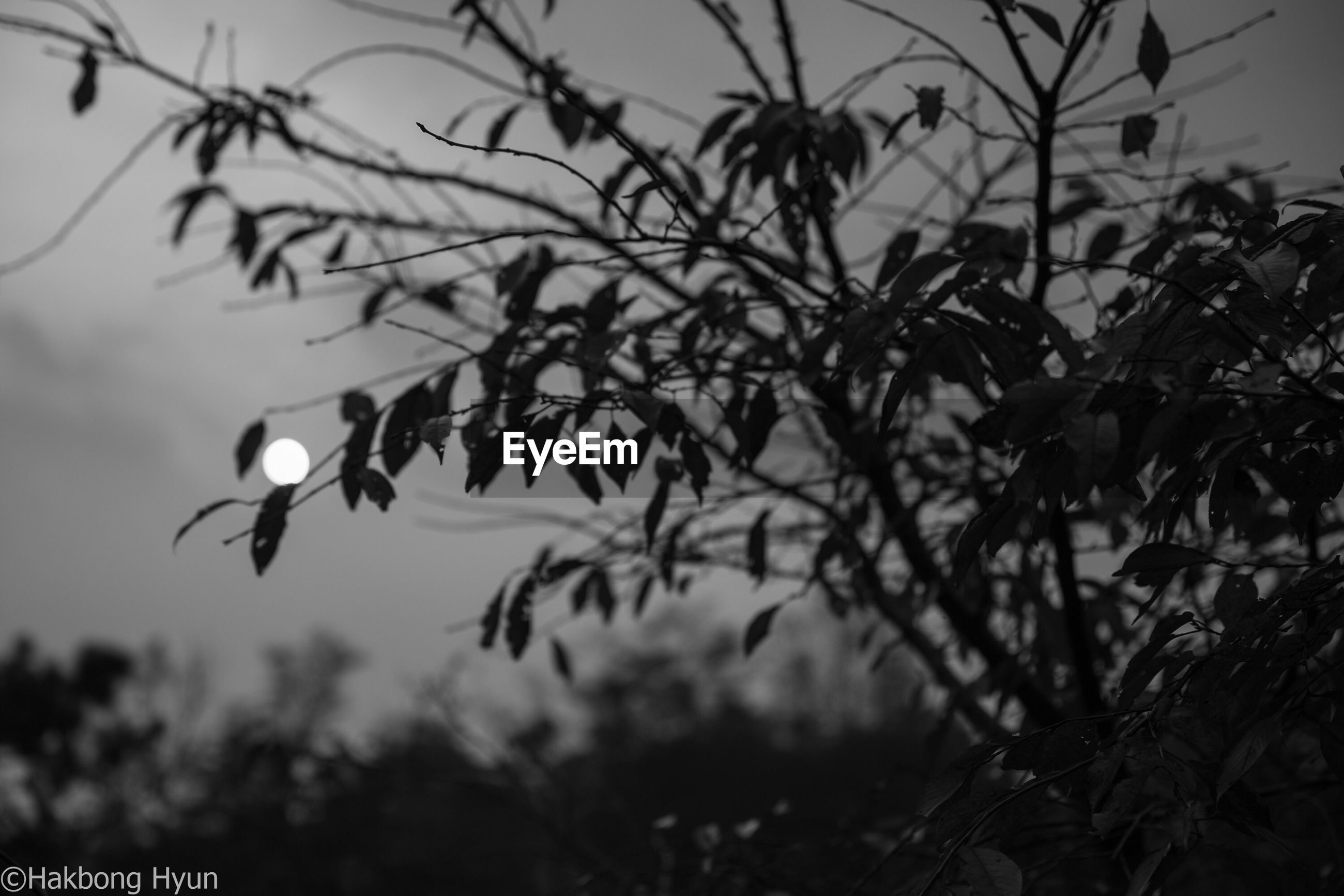 focus on foreground, moon, nature, outdoors, no people, branch, tree, beauty in nature, day, sky, close-up, fragility