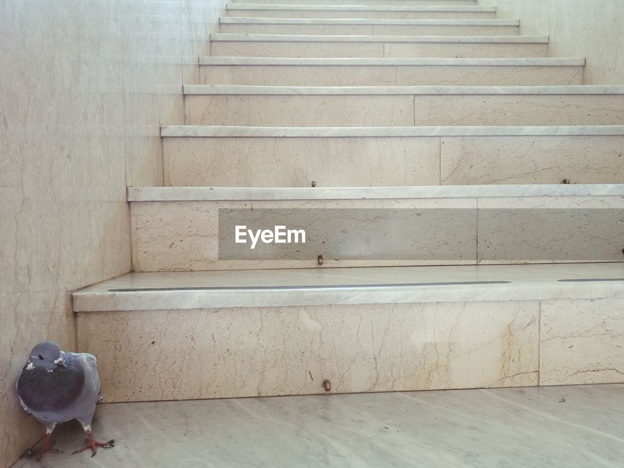 staircase, steps and staircases, indoors, no people, architecture, built structure, wall - building feature, wood - material, day, railing, white color, pattern, absence, empty, flooring, wood, nature, high angle view