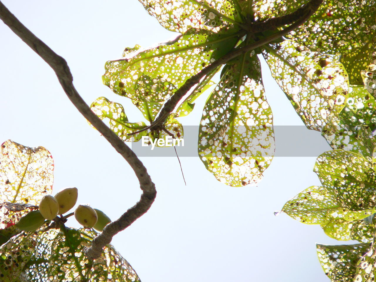 plant, tree, low angle view, growth, sky, branch, nature, beauty in nature, no people, day, plant part, leaf, clear sky, outdoors, green color, tranquility, sunlight, close-up, leaves, freshness