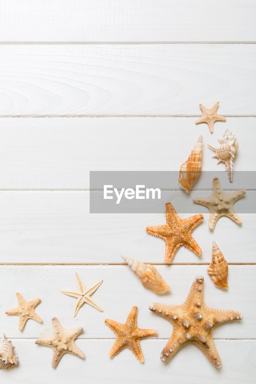 star shape, shape, indoors, decoration, starfish, no people, high angle view, still life, table, christmas, design, wood - material, celebration, variation, holiday, christmas decoration, cookie, nature, close-up, celebration event