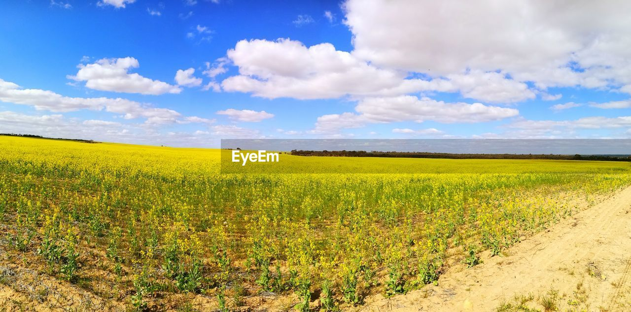 field, agriculture, landscape, scenics, tranquil scene, nature, beauty in nature, tranquility, rural scene, farm, yellow, sky, crop, cloud - sky, growth, day, no people, green color, outdoors, oilseed rape