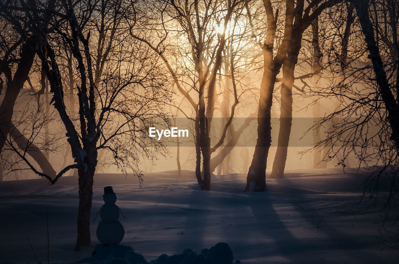 tree, bare tree, plant, branch, nature, silhouette, beauty in nature, tranquility, cold temperature, real people, winter, land, fog, tranquil scene, scenics - nature, one person, snow, sky, outdoors