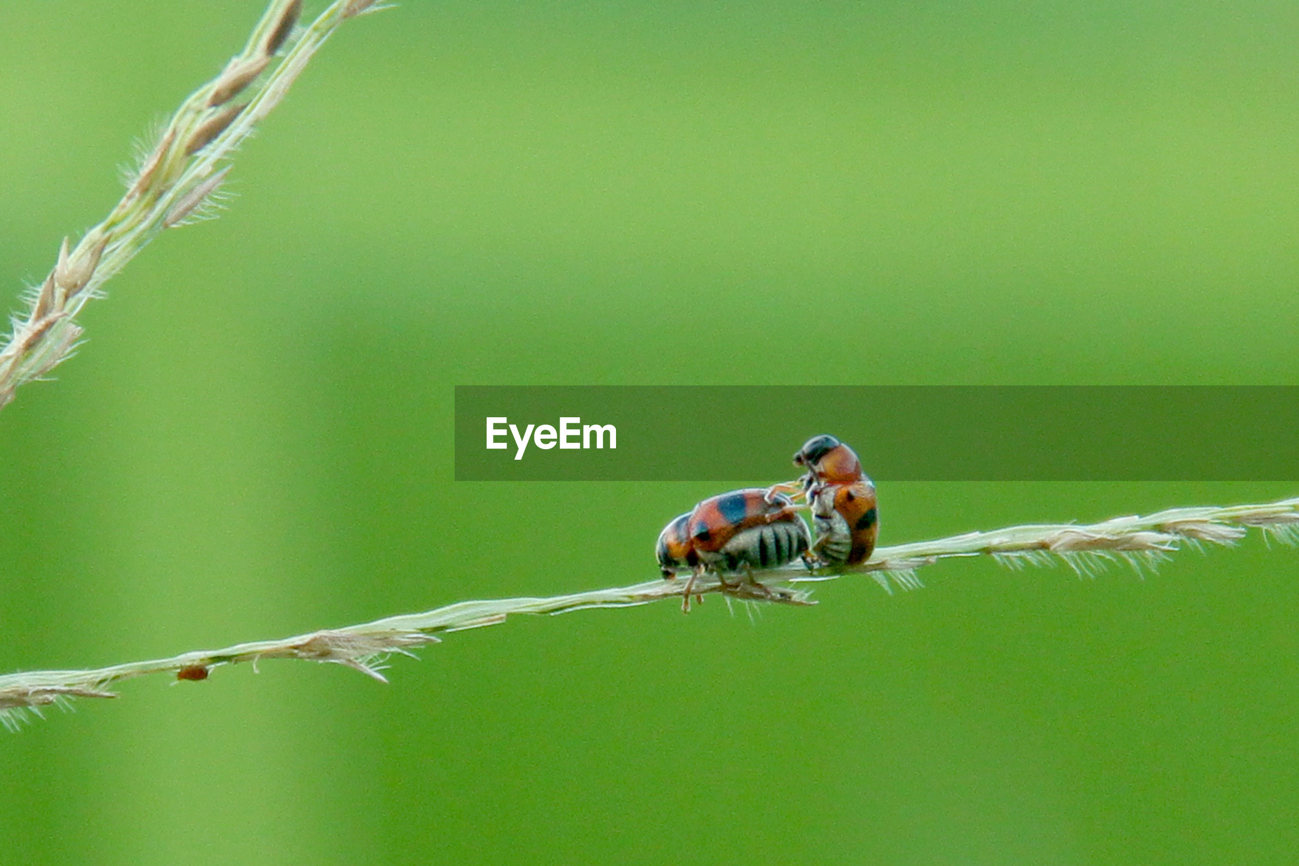 Making Love Macro Nature Photography Eyeem Use Selective Focus In For Dummies Want To Buy This Photo