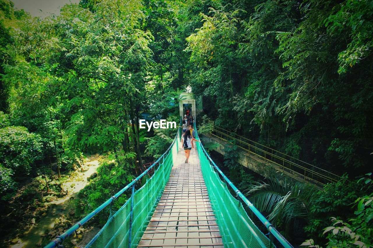 tree, plant, real people, green color, lifestyles, forest, connection, bridge, direction, the way forward, leisure activity, rear view, growth, nature, day, people, walking, transportation, architecture, railing, outdoors, bridge - man made structure, footbridge, diminishing perspective