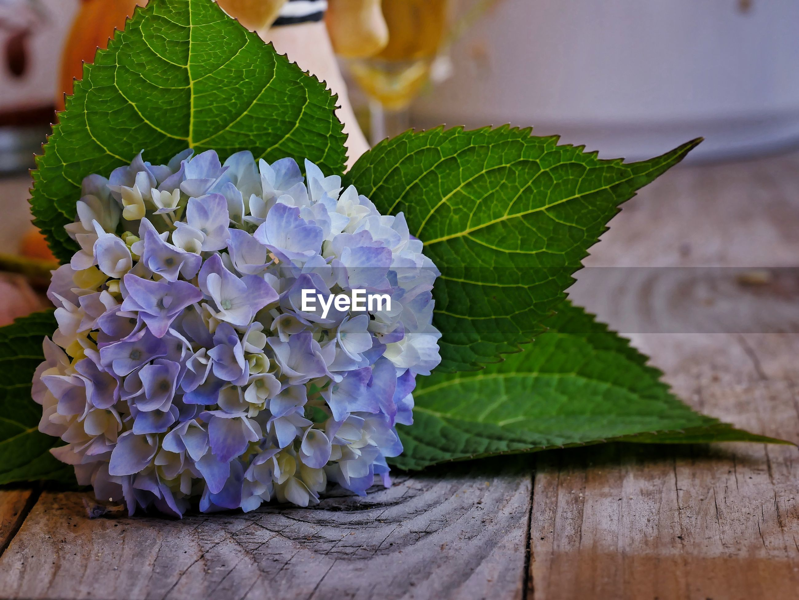 CLOSE-UP OF PURPLE FLOWERING PLANT ON WOODEN TABLE
