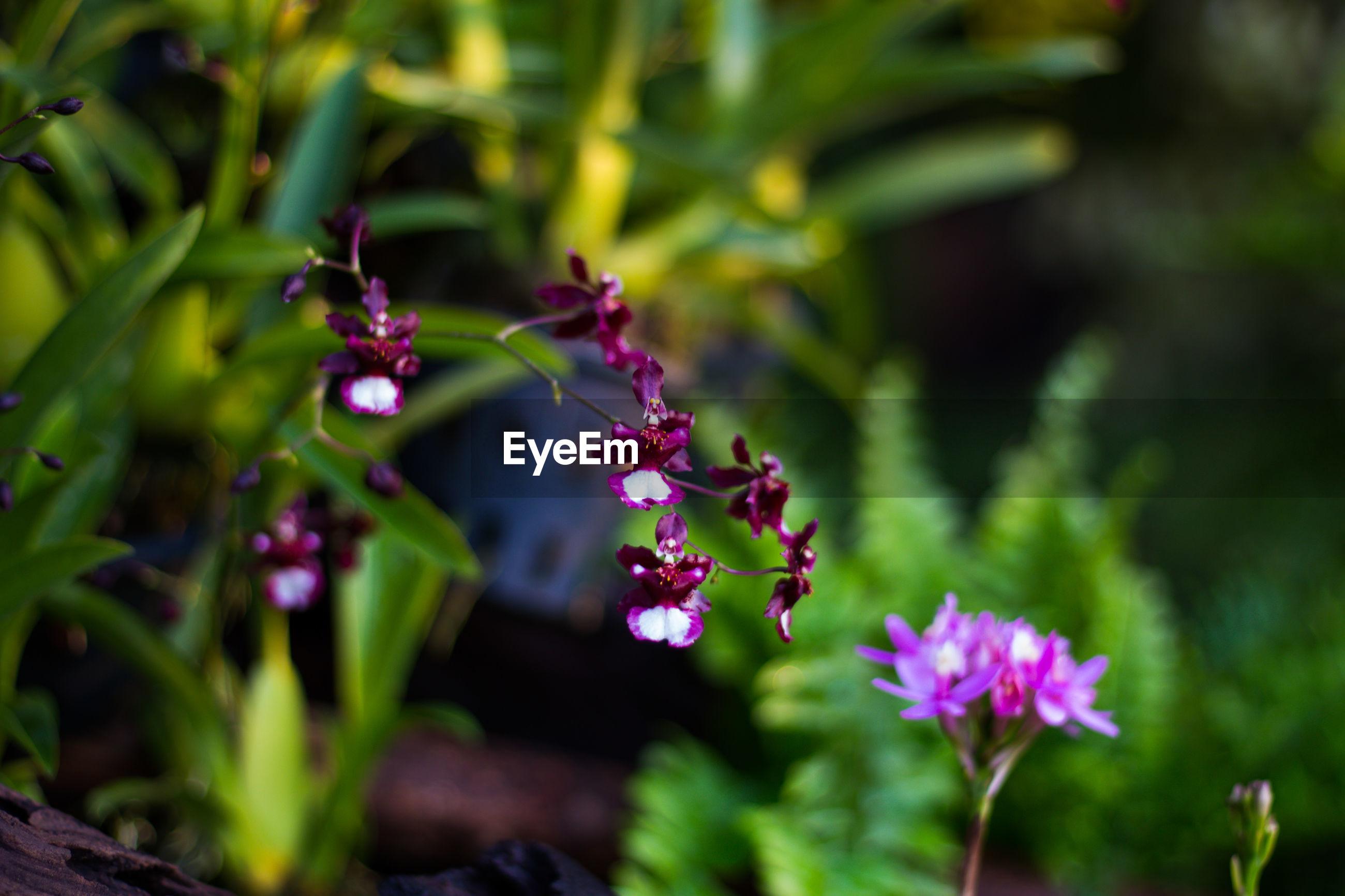 CLOSE UP OF PURPLE FLOWERING PLANT