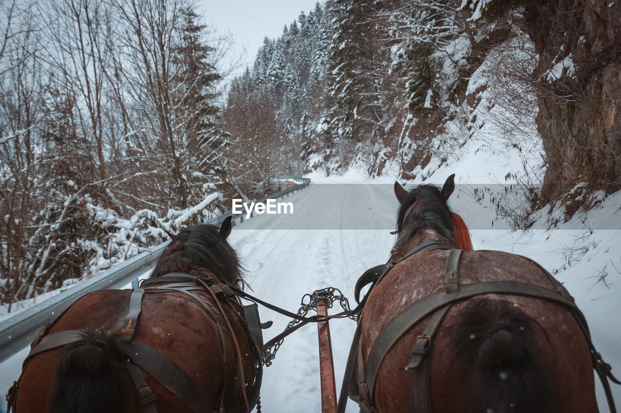 Horses drawing cart on snow covered landscape