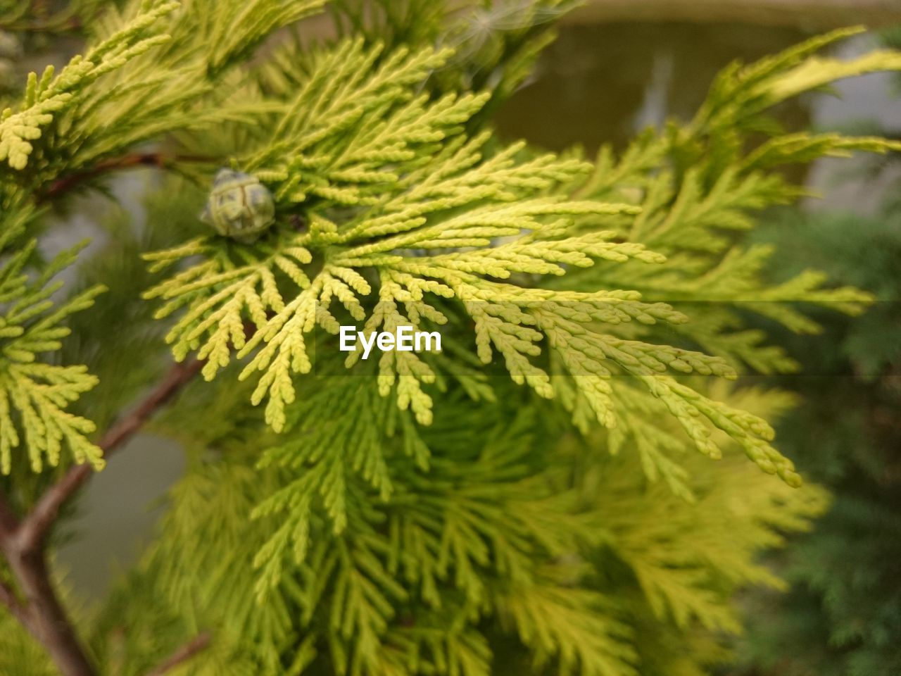green color, growth, nature, close-up, no people, focus on foreground, pine tree, day, plant, leaf, beauty in nature, outdoors, tree, branch, freshness