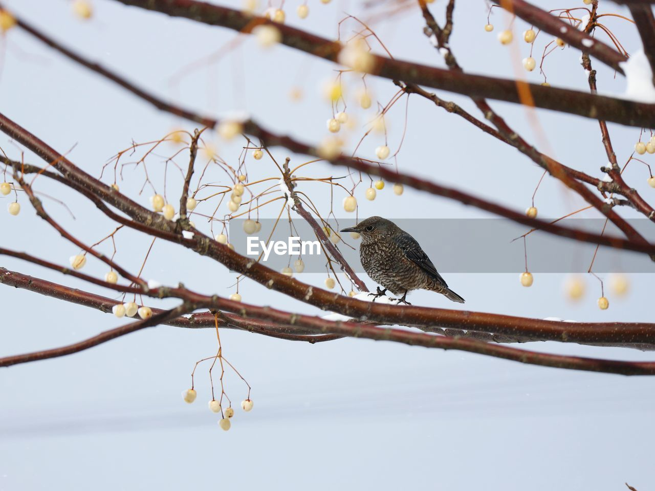 one animal, branch, animals in the wild, perching, bird, animal themes, focus on foreground, animal wildlife, no people, nature, tree, day, outdoors, beauty in nature, robin, close-up