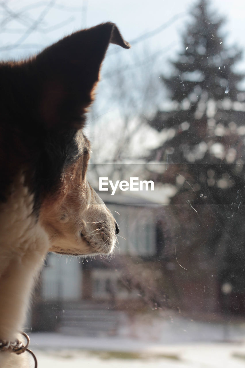 Close-Up Of Animal Ear