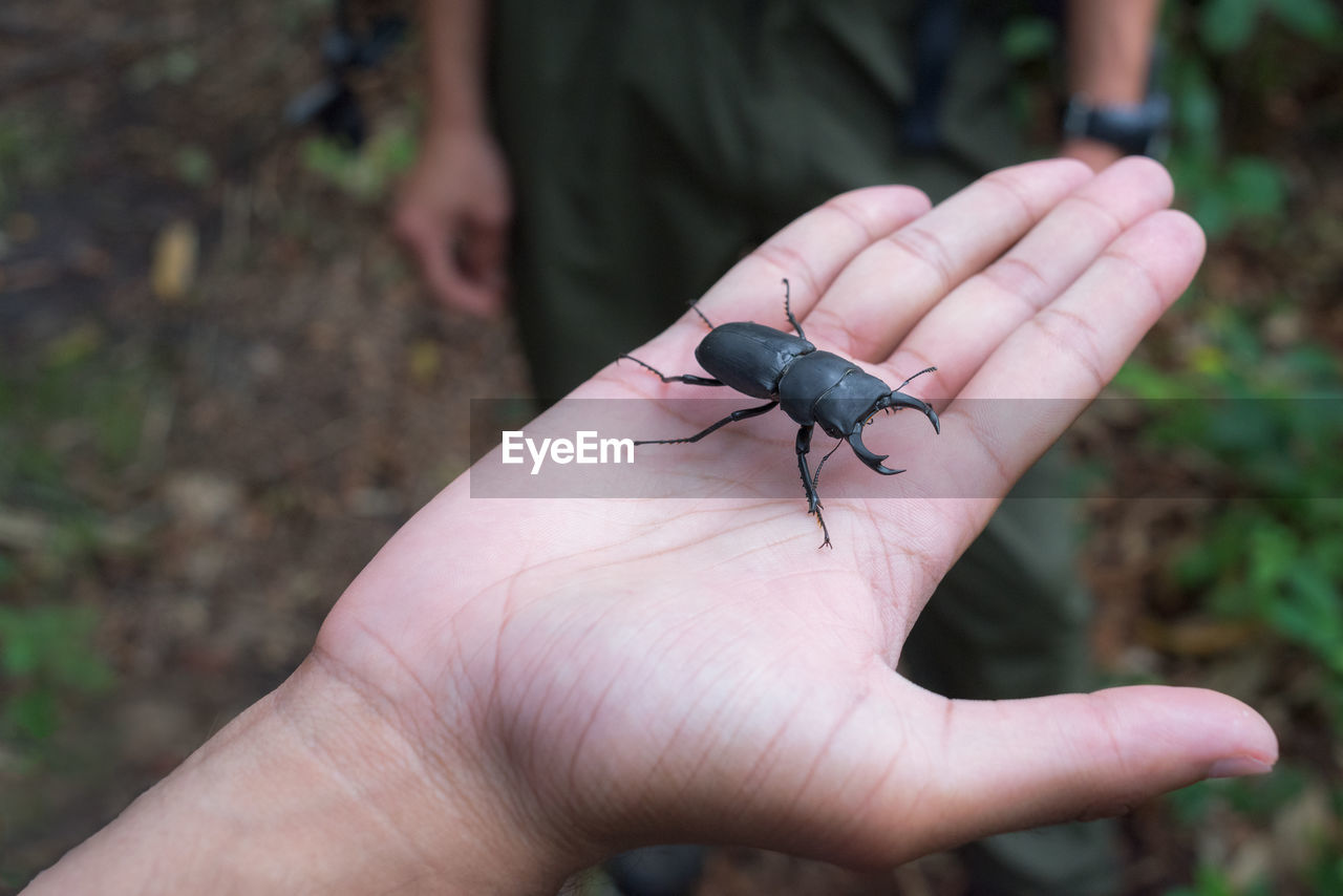 MIDSECTION OF PERSON HOLDING INSECT