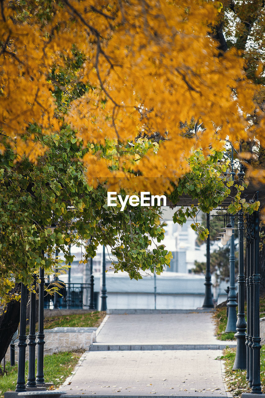 plant, tree, yellow, footpath, architecture, nature, growth, the way forward, no people, beauty in nature, direction, built structure, autumn, day, building exterior, outdoors, city, street, flower, building, change, treelined
