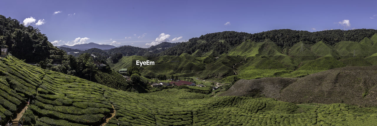mountain, sky, beauty in nature, scenics - nature, landscape, tranquil scene, environment, tranquility, plant, nature, green color, mountain range, no people, land, day, growth, tree, non-urban scene, idyllic, agriculture, tea crop, plantation