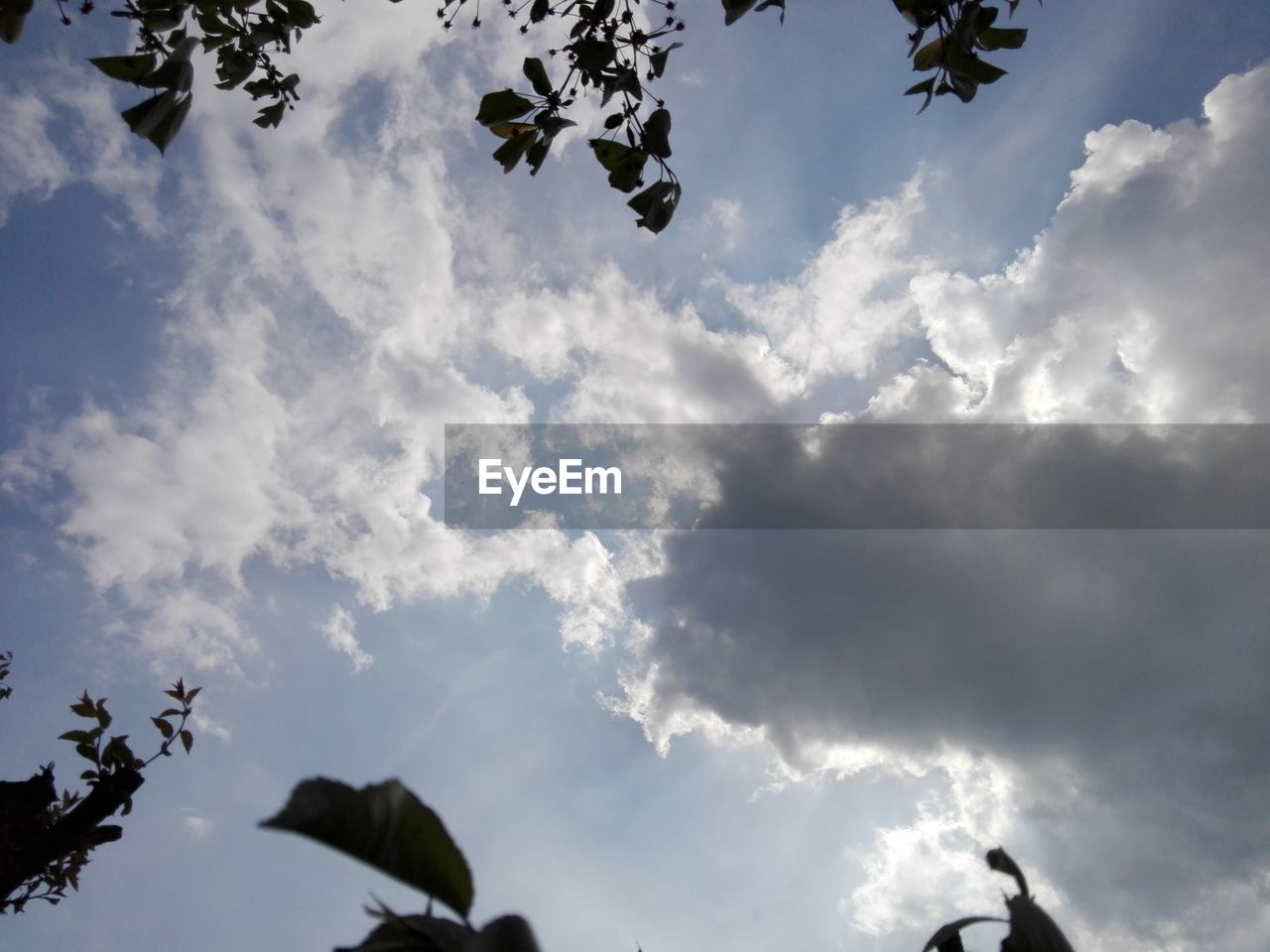 low angle view, sky, cloud - sky, flying, nature, day, outdoors, no people, beauty in nature, spread wings