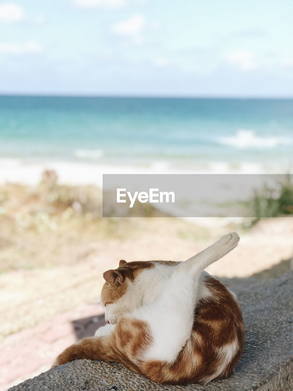 one animal, mammal, animal themes, animal, pets, domestic, domestic animals, sea, vertebrate, land, water, beach, relaxation, nature, day, canine, dog, horizon over water, cat, no people, outdoors