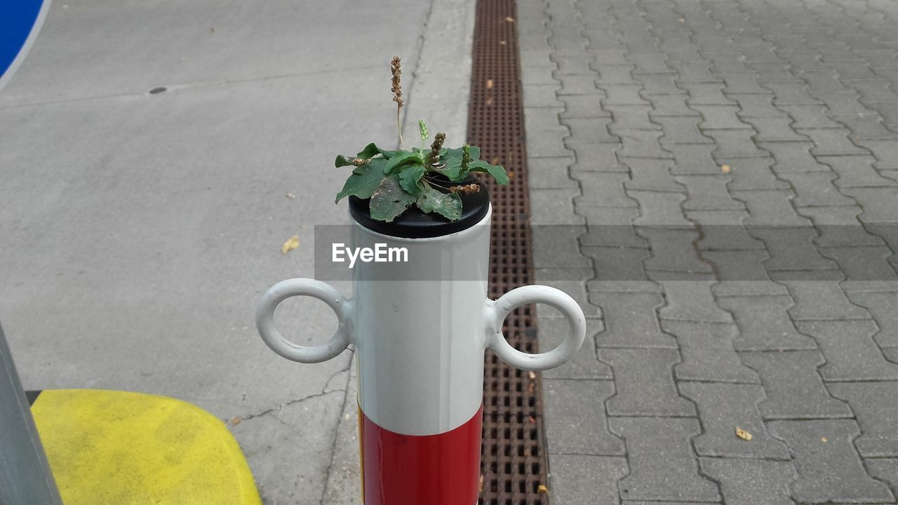 growth, outdoors, plant, day, potted plant, no people, leaf, close-up