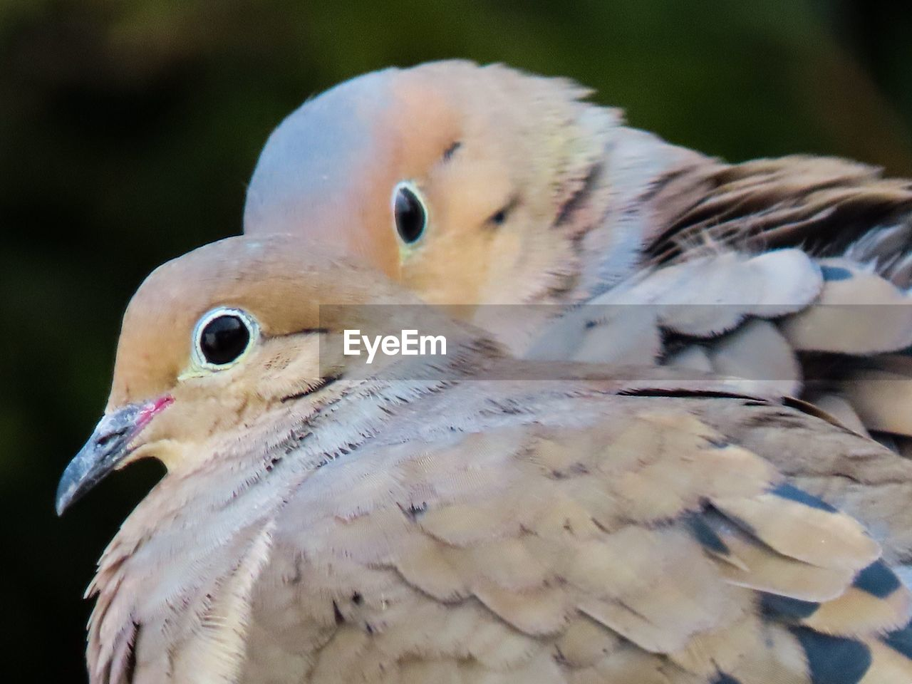 bird, animals in the wild, animal wildlife, vertebrate, animal, animal themes, group of animals, close-up, no people, focus on foreground, two animals, day, nature, beak, beauty in nature, outdoors, selective focus, animal body part