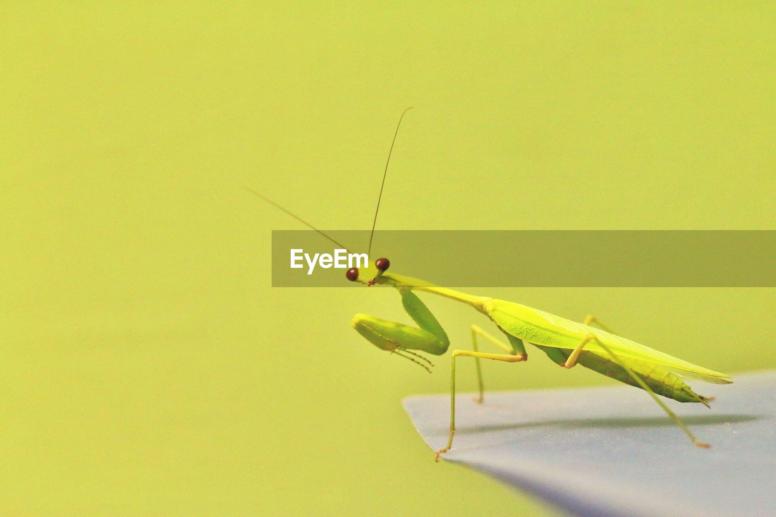 Close-up of grasshopper