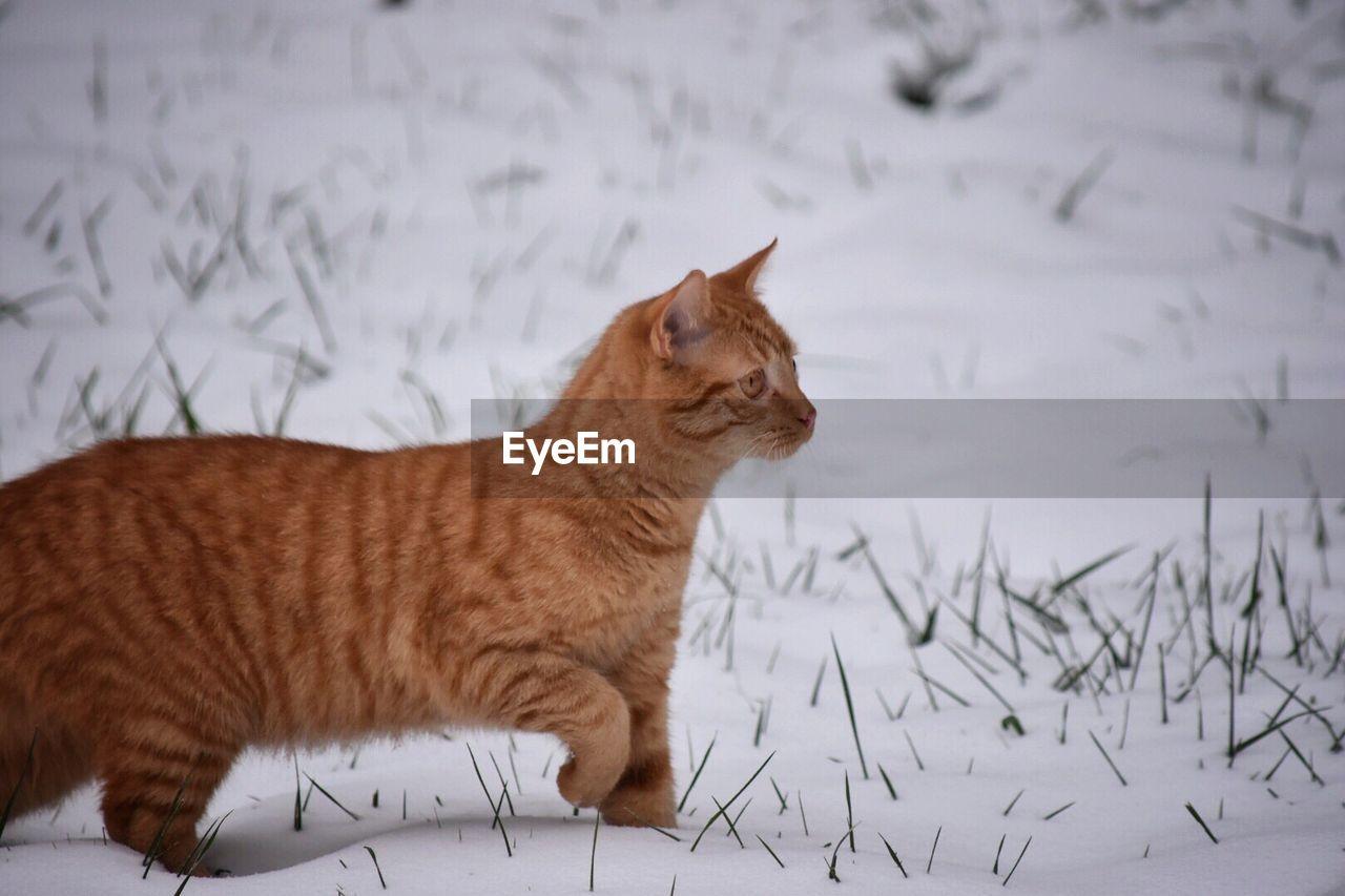 Close-Up Of Cat On Snow