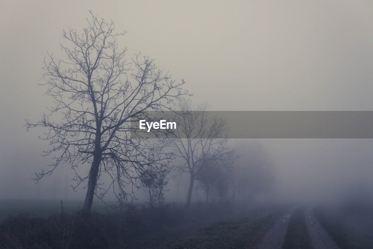 fog, tree, beauty in nature, bare tree, sky, plant, tranquility, tranquil scene, road, no people, nature, scenics - nature, landscape, environment, the way forward, direction, branch, transportation, non-urban scene, outdoors, hazy, isolated