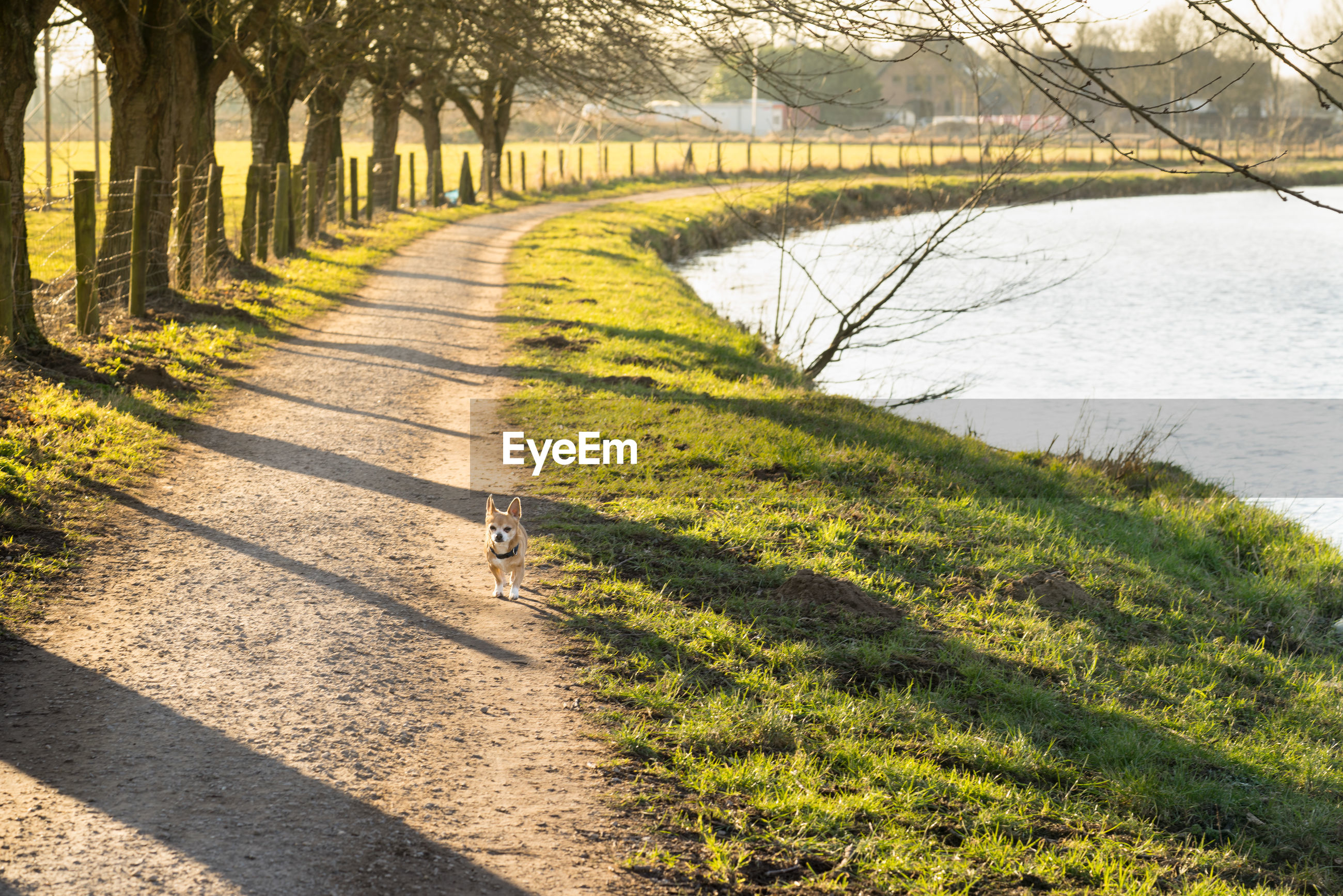 Dog walking on footpath amidst grass by lake