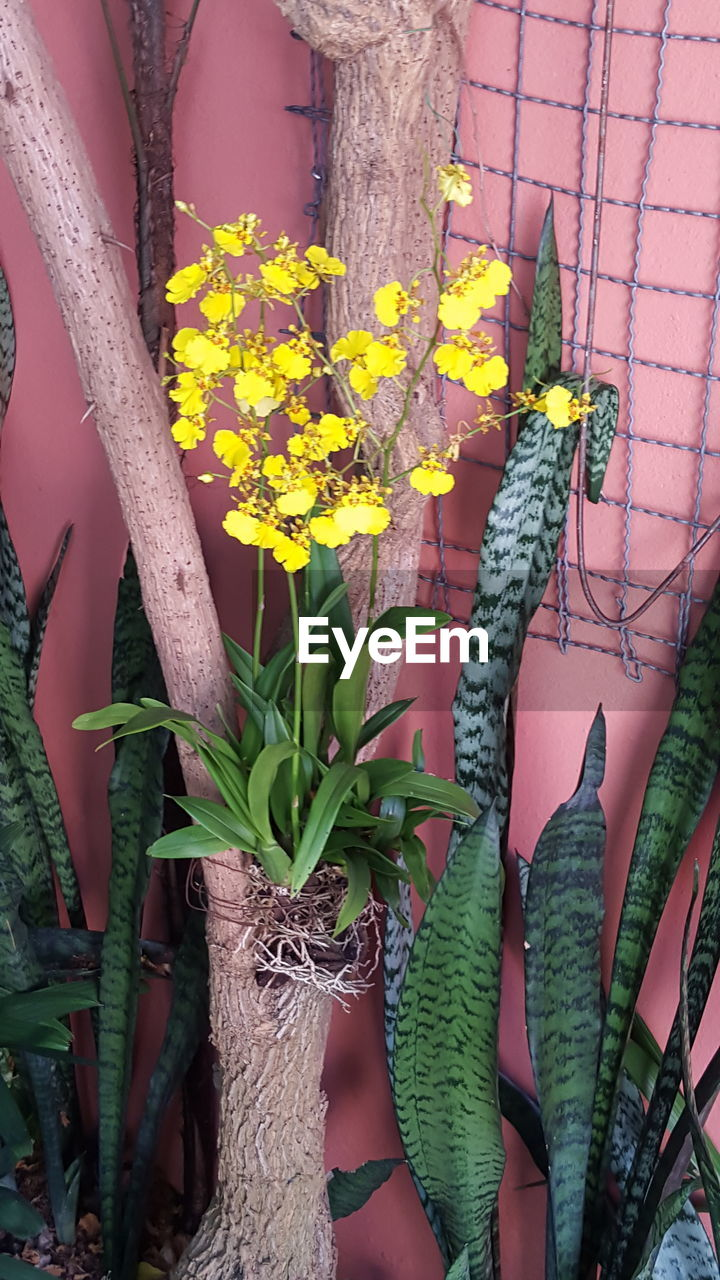 flower, growth, nature, yellow, plant, day, fragility, outdoors, green color, beauty in nature, freshness, no people, tree trunk, close-up, tree, flower head