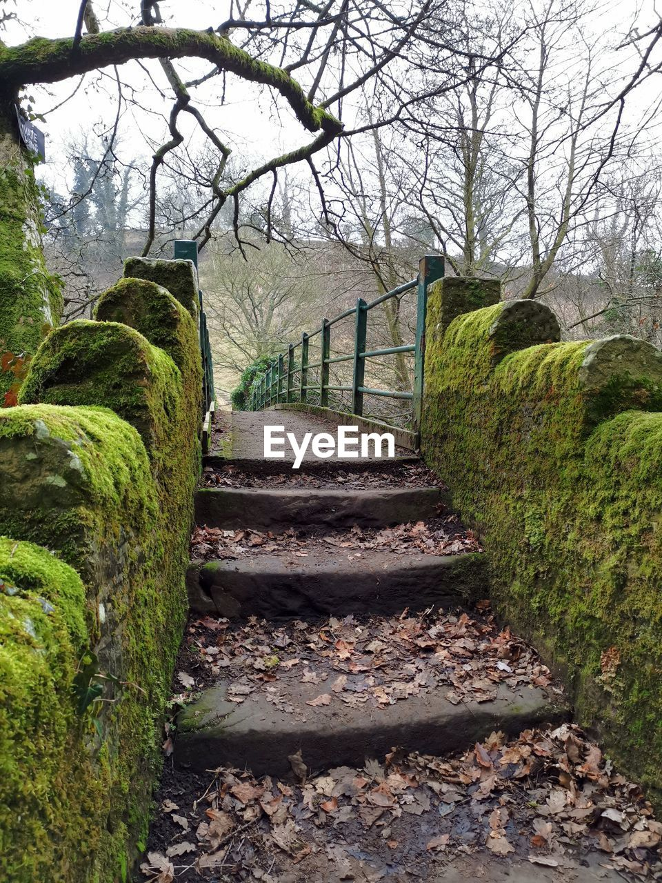 plant, tree, staircase, architecture, no people, nature, direction, the way forward, solid, day, built structure, steps and staircases, tranquility, land, rock, stone - object, grass, outdoors, bare tree, tranquil scene