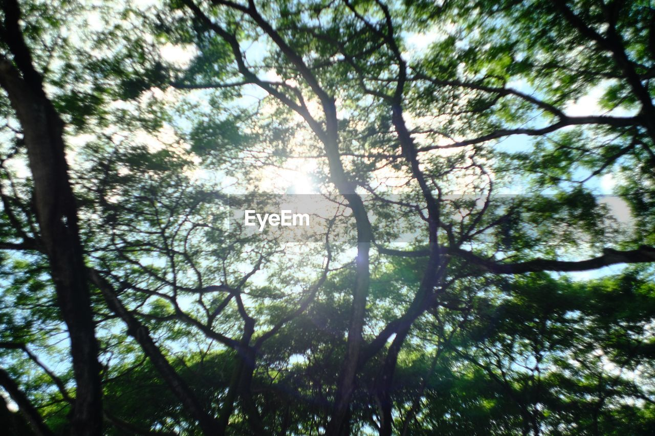 tree, nature, tranquility, day, low angle view, beauty in nature, sunlight, no people, branch, outdoors, growth, forest, scenics, sky