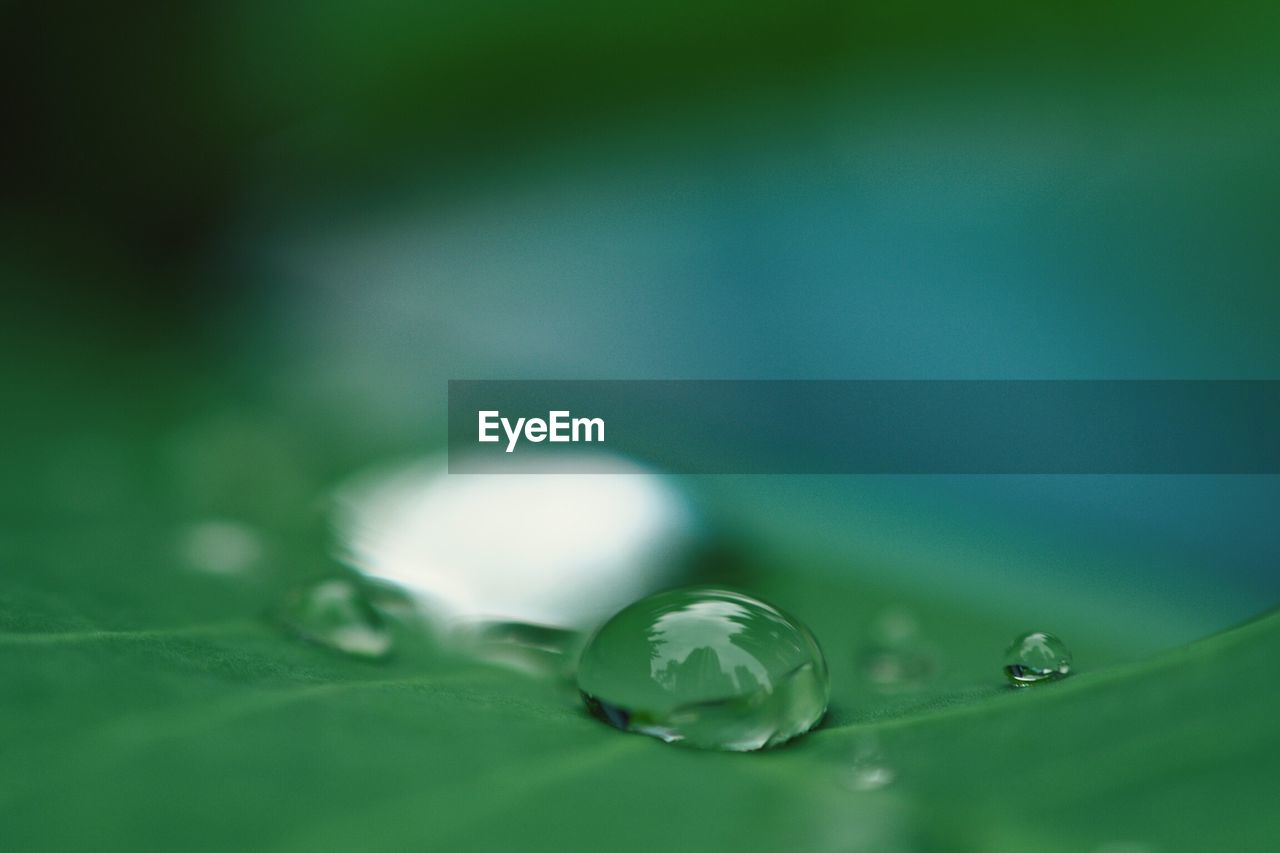 drop, selective focus, green color, close-up, water, leaf, plant part, wet, freshness, no people, plant, vulnerability, nature, beauty in nature, purity, fragility, growth, dew, outdoors, rain, raindrop, leaves