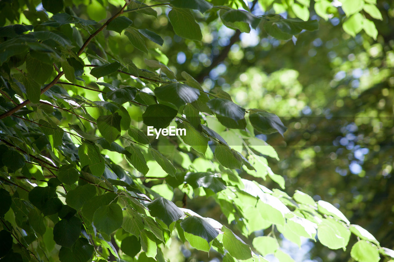 tree, leaf, plant, plant part, growth, low angle view, green color, branch, nature, day, no people, one animal, vertebrate, animal themes, animals in the wild, bird, animal wildlife, beauty in nature, animal, focus on foreground, outdoors