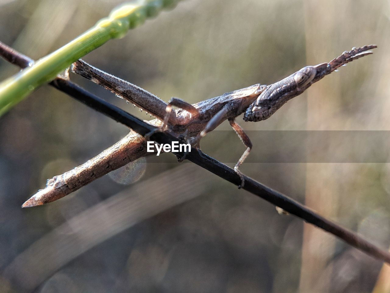 animals in the wild, focus on foreground, animal wildlife, close-up, one animal, animal, animal themes, day, invertebrate, no people, insect, nature, zoology, metal, outdoors, fence, selective focus, wire, twig, plant